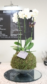 Fresh orchid display